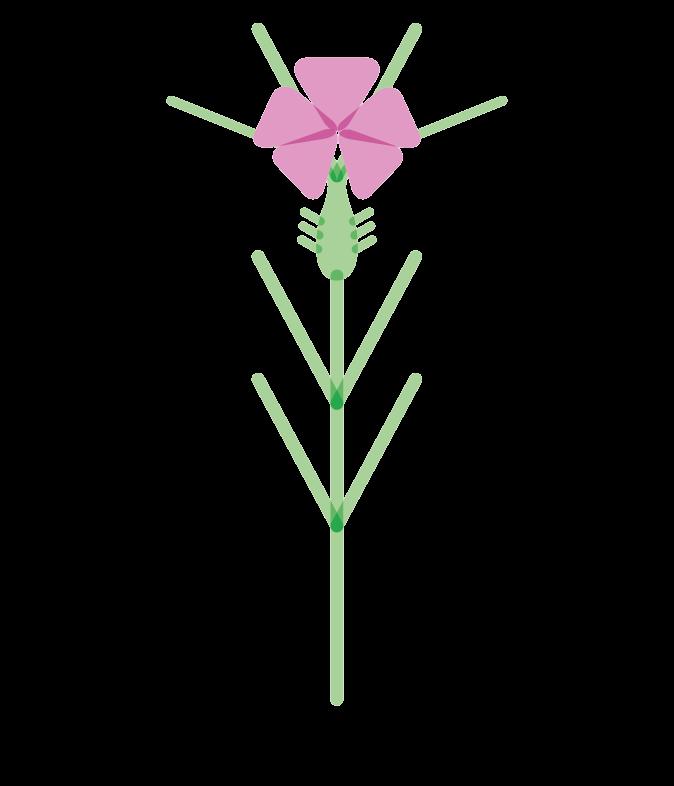 Albgemacht bietet Flockenblumen Raum zum Wachsen auf Äckern und Wiesen